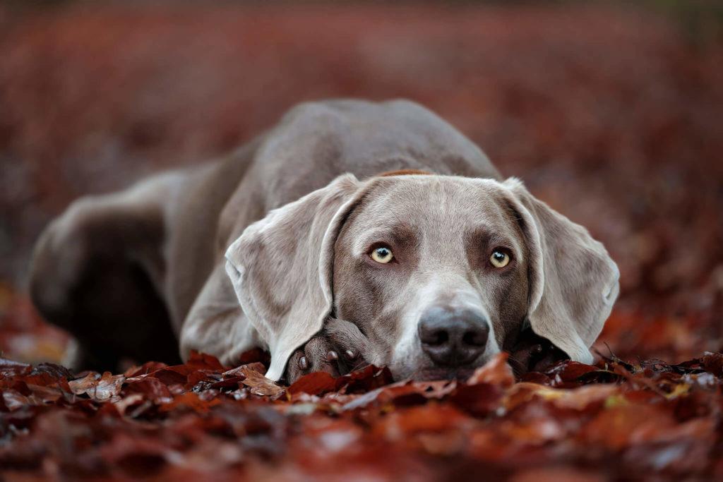 Hundefotografie Friedrichshafen, Ravensburg, Lindau, Hundeshooting
